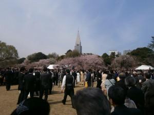 桜を見る会5