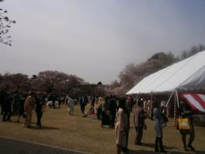桜を見る会8